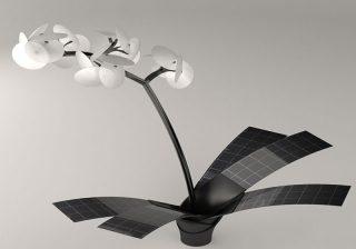 orchidea che si illumina